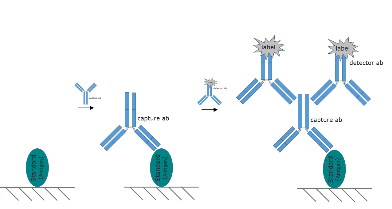 Representative image of an Indirect ELISA