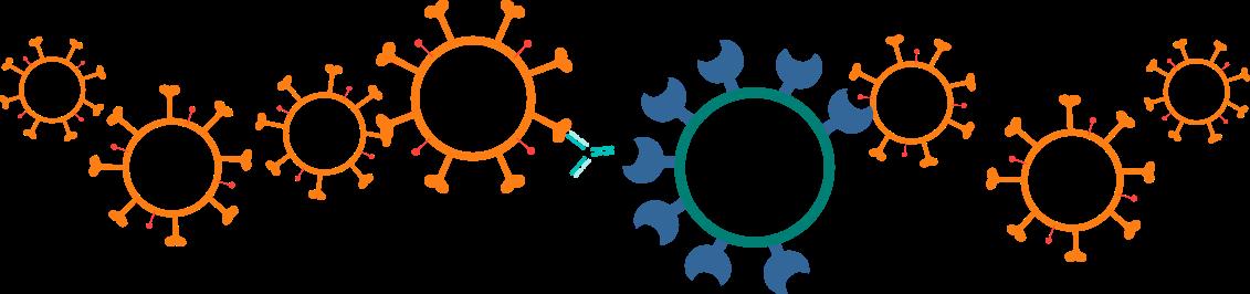 SARS-CoV-2 Neutralizing Antibody
