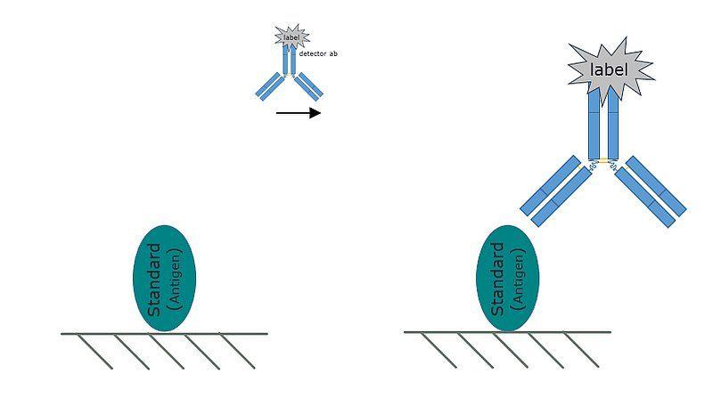 Representative image of a direct ELISA
