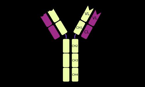 anti-Immunoglobulin E (IgE)  antibody