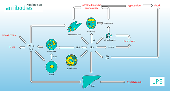 Pathophysiological effects of gram-negative bacteria endotoxin