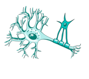 Oligodendrocytes - antibodies-online.com