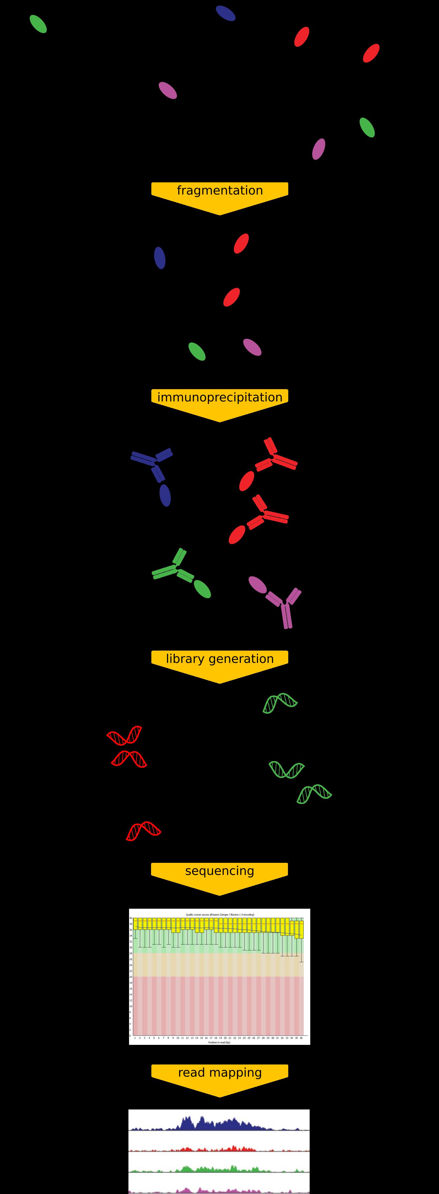 ChIP-seq diagram