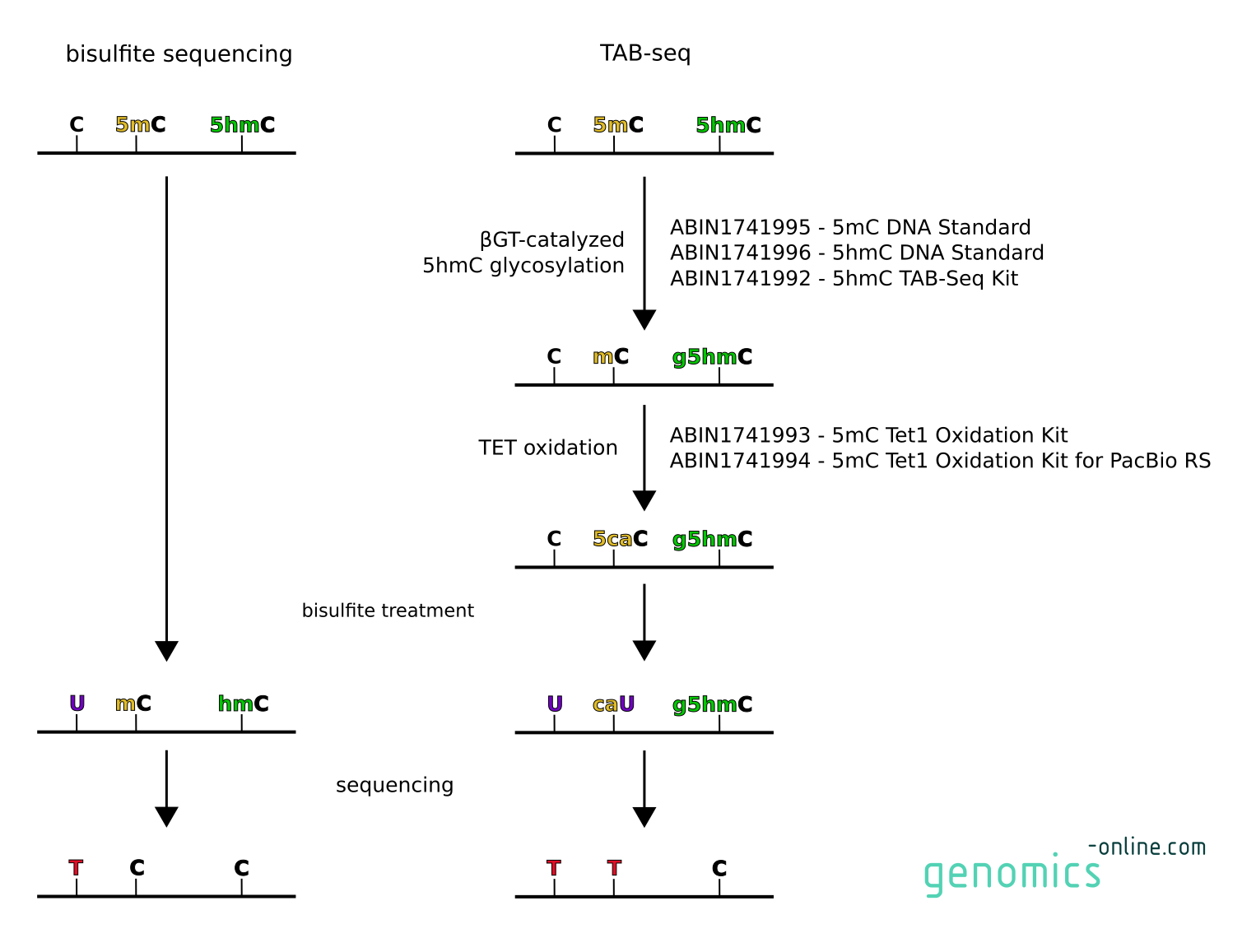 Bisulfite sequencing versus TAB-seq. genomics-online.com offers TAB-seq kits and reagents for every single step.