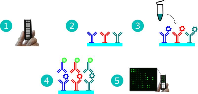 Antibody Array Workflow