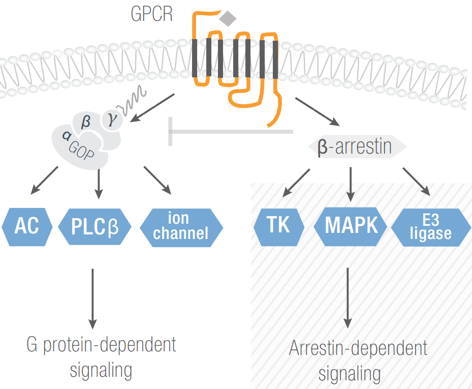 Principle of GPCR signalling
