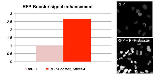 RFP-Booster