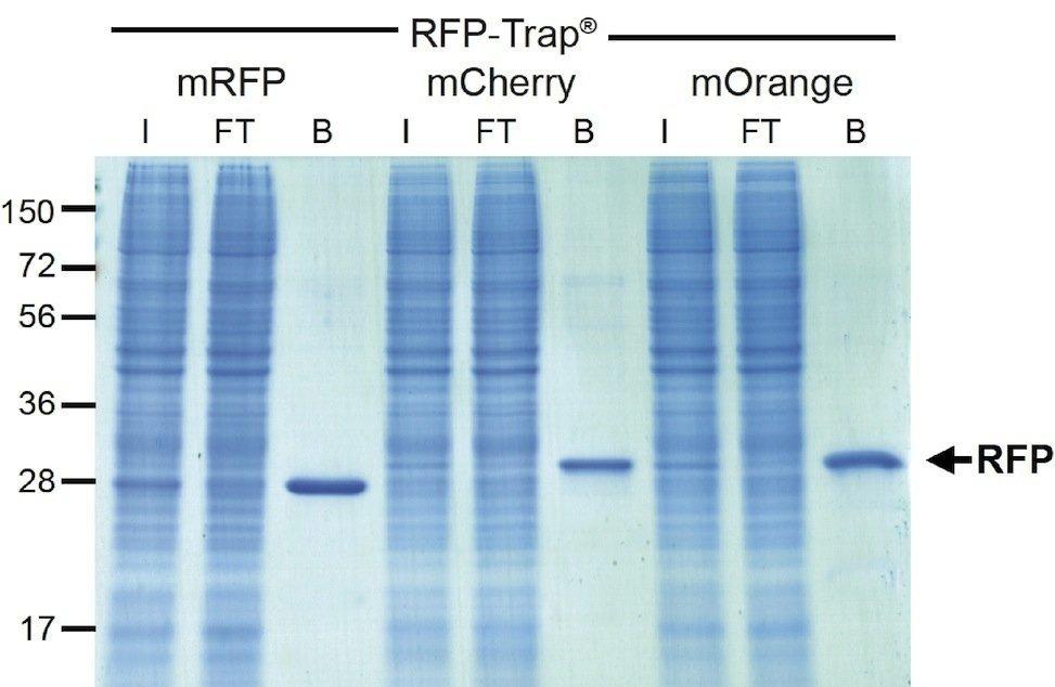 RFP-Traps®