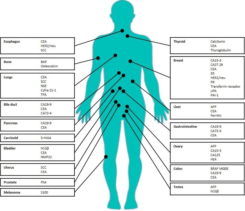 Tumor markers and their sites.