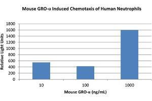 Image no. 1 for Chemokine (C-X-C Motif) Ligand 1 (Melanoma Growth Stimulating Activity, Alpha) (CXCL1) protein (ABIN6699666)
