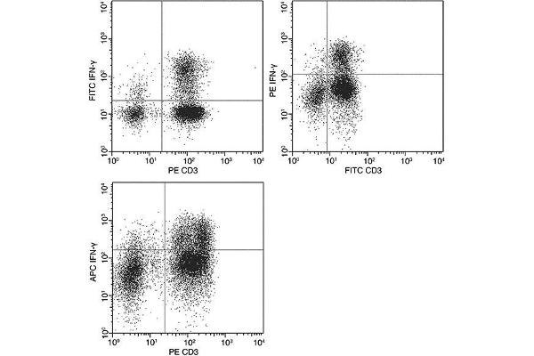 Flow cytometric analysis of Human IFN-γ expression on human peripheral blood lymphocytes.  Human peripheral blood mononulcear cells were stimulated for 4-6 hours with PMA and Ionomycin in the presence of GolgiPlug. The cells were treated according to manufacturer's manual (BD Pharmingen™ Cat. No. 554714), stained with PE-conjugated anti-Human IFN-γ and FITC-conjugated anti-Human CD3. The dot plots were derived from gated events with the forward and side light-scatter characteristics of viable lymphocytes.