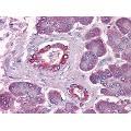 anti-DUSP6 antibody (Dual Specificity Phosphatase 6) (AA 1-382)
