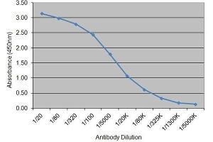 Image no. 1 for anti-Insulin (INS) antibody (ABIN2475105)