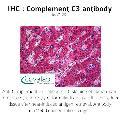 anti-C3 antibody (Complement Component 3)