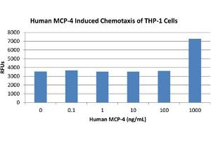 Image no. 2 for Chemokine (C-C Motif) Ligand 13 (CCL13) protein (ABIN6699598)