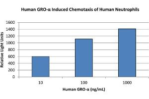 Image no. 1 for Chemokine (C-X-C Motif) Ligand 1 (Melanoma Growth Stimulating Activity, Alpha) (CXCL1) protein (ABIN6699662)