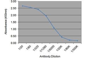 Image no. 1 for anti-Sex Hormone Binding Globulin (SHBG) antibody (ABIN2476455)