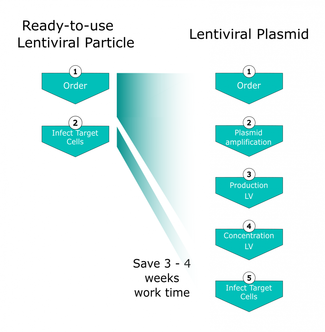Fig.1: Comparison of work time necessary until target cell infection: Left: Ready-to-use-Lentiviral Particles; Right: Lentiviral Plasmid